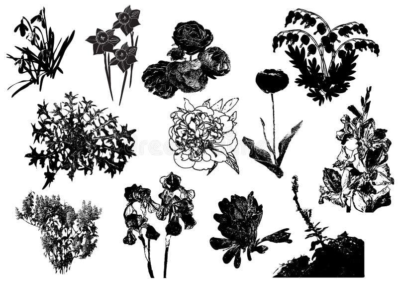 Sylwetki ogrodowi kwiaty, dzikie rośliny i ziele, royalty ilustracja
