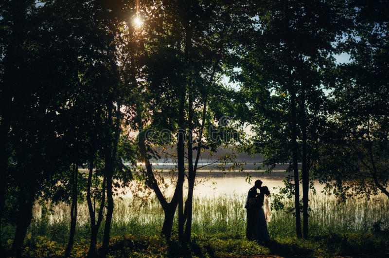 Sylwetki państwo młodzi całują na brzeg jezioro między drzewami przy zmierzchem fotografia stock