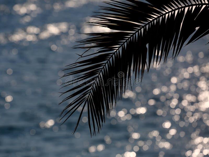 sylwetki palmowy drzewo zdjęcie stock