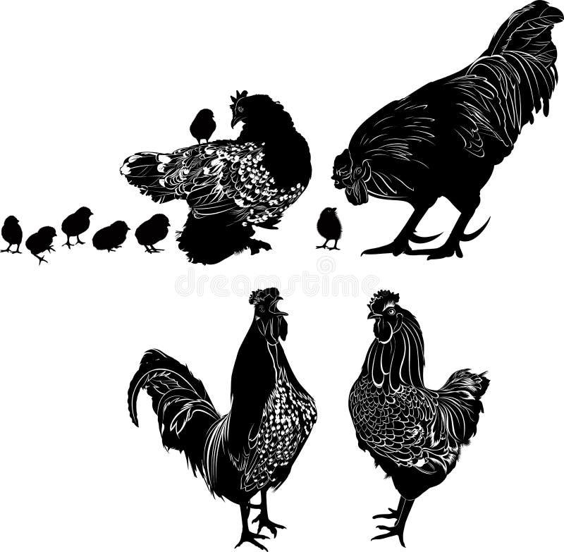 Sylwetki ptaki kurni z kurczakami i kogutem Drobiowy logo royalty ilustracja