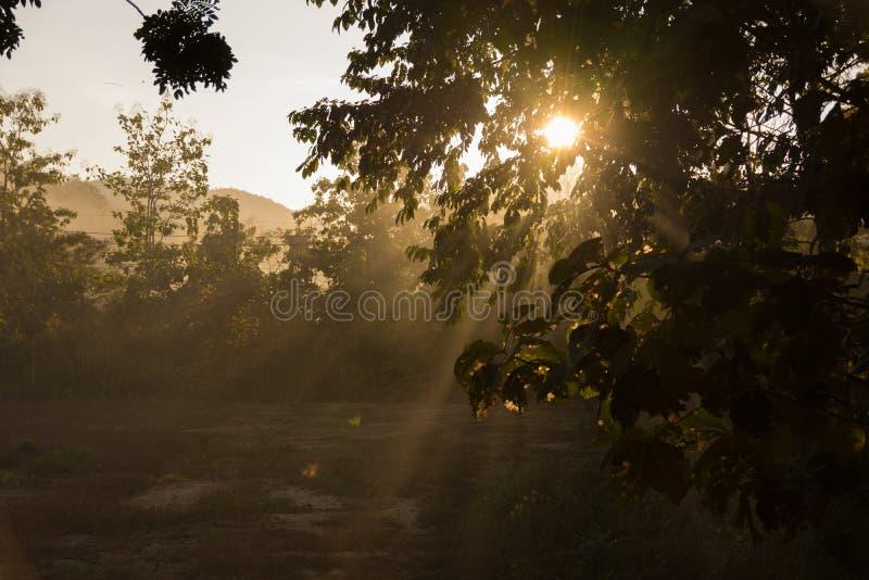 Sylwetki zieleń opuszcza na świetle słonecznym Z słońca jaśnieniem fotografia stock