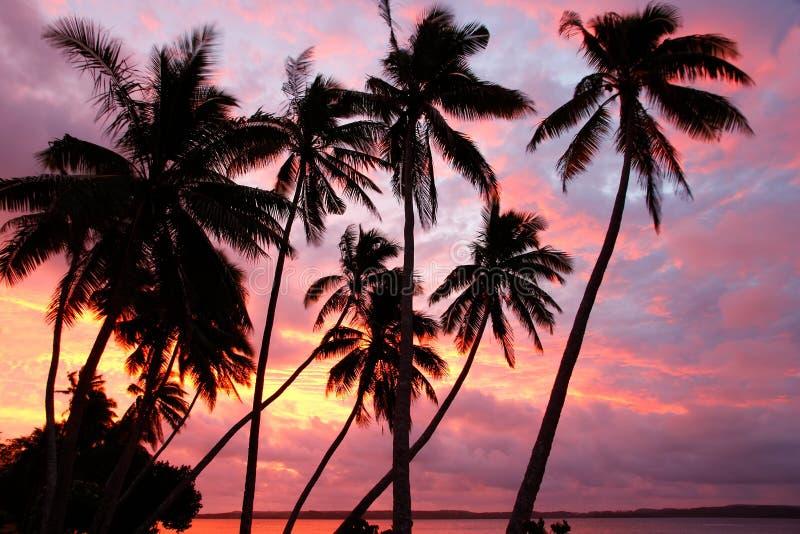 Sylwetkowi drzewka palmowe na plaży przy zmierzchem, Ofu wyspa, Tonga obrazy royalty free