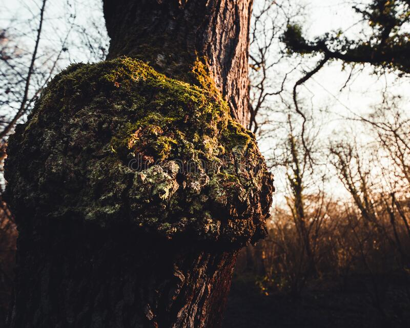 Symbiosis on a tree log during sunrise royalty free stock photography