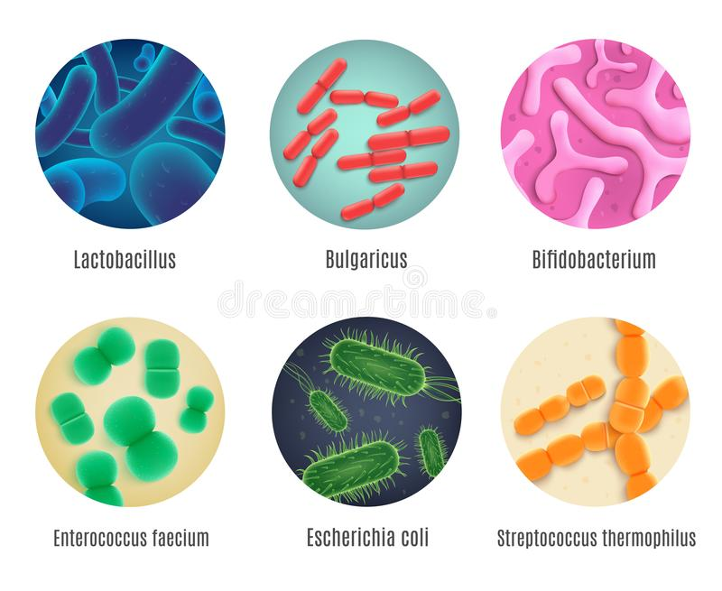 Symbiotische Menselijke Bacteriën Realistische Vectorreeks vector illustratie