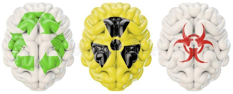Download Symbol brains stock illustration. Image of cerebellum - 29625290