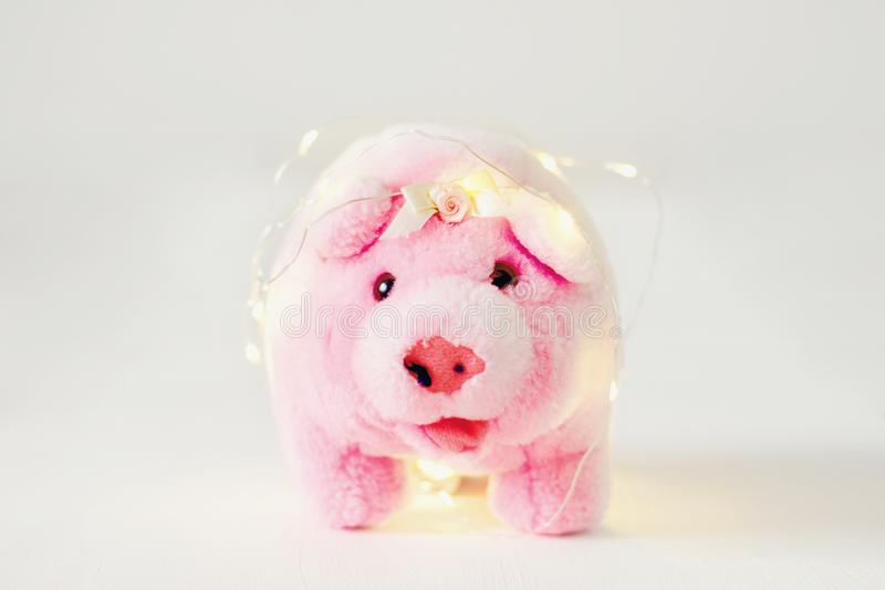 Symbol of 2019 chinese new year yellow ground pig on holiday festive royalty free stock photos