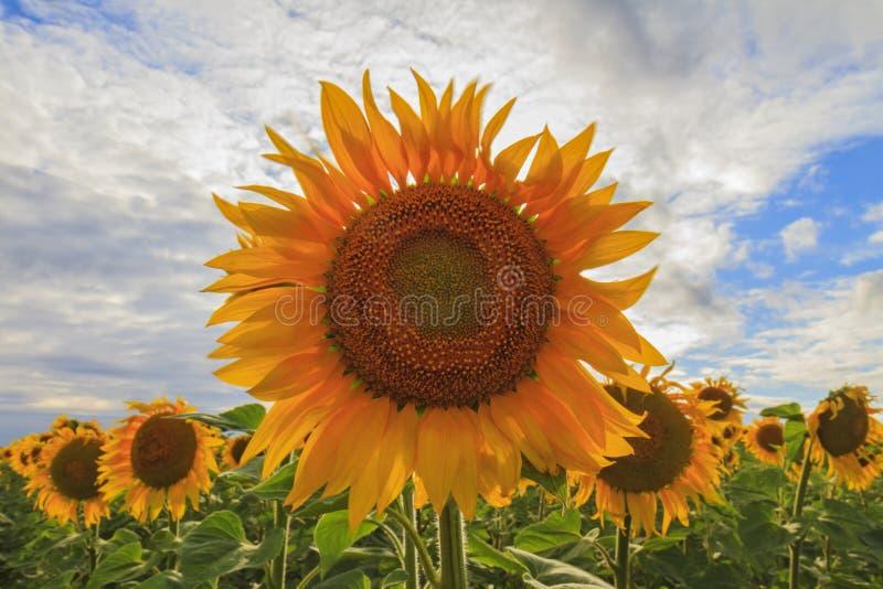 Symbol der Gottheit der Sonne stockbild