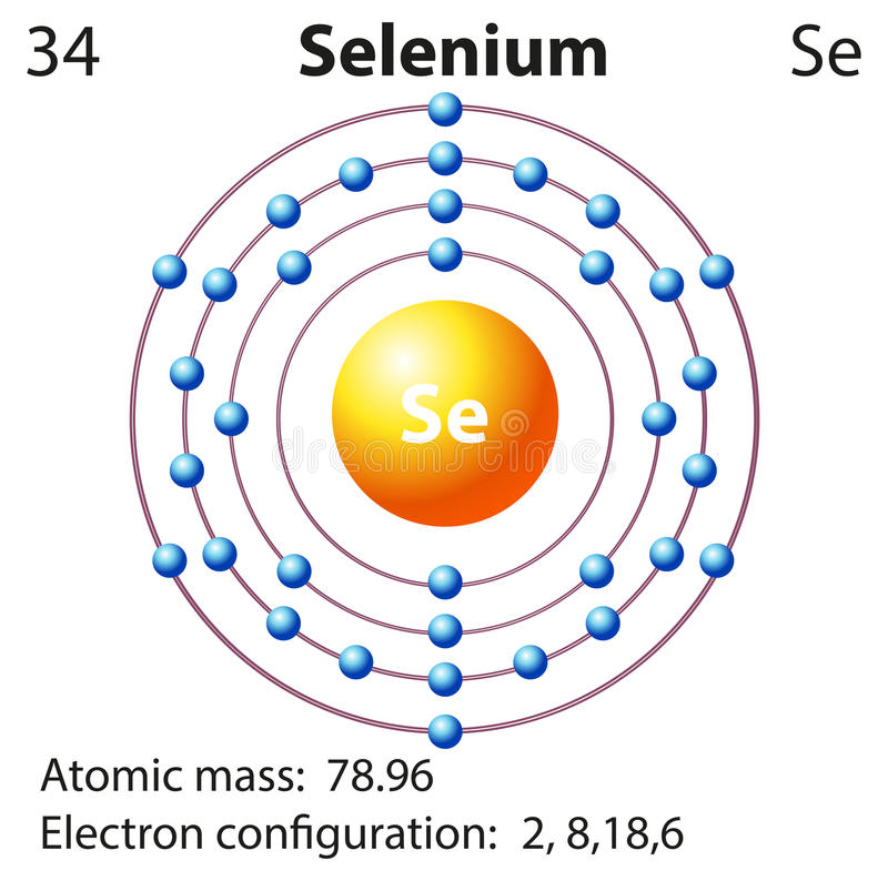 Symbol and electron diagram for Selenium. Illustration vector illustration