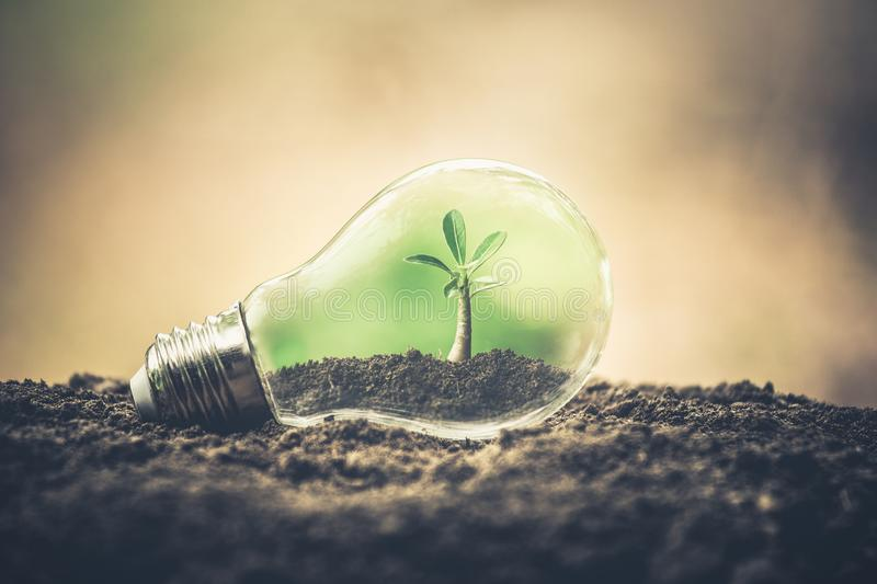 Symbol of environmental disaster or protection and helping tree growing a light bulb inside. royalty free stock photography