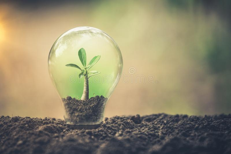 Symbol of environmental disaster or protection and helping tree growing a light bulb inside. Environment management stock photo