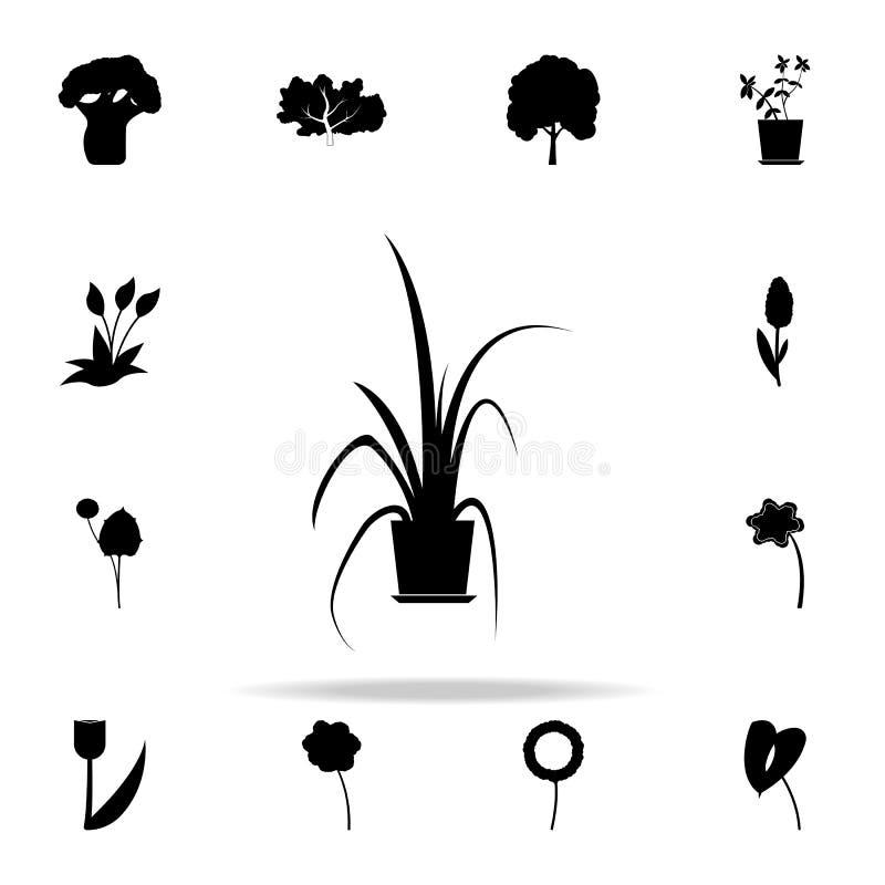 symbol för kinesisk evergreen Universell uppsättning för växtsymboler för rengöringsduk och mobil royaltyfri illustrationer