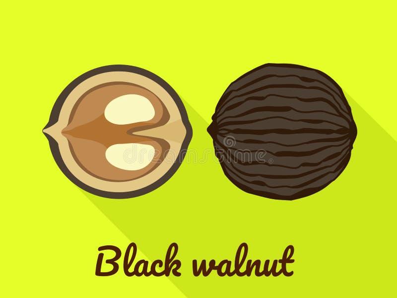 Symbol för svart valnöt, plan stil vektor illustrationer