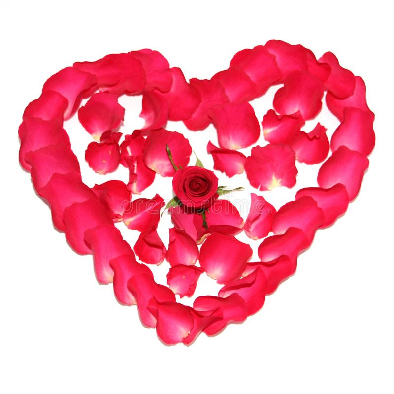 The symbol of love is laid out of roses in the shape of a heart. Red heart of rose petals. The symbol of love is laid out of roses in the shape of a heart royalty free stock images