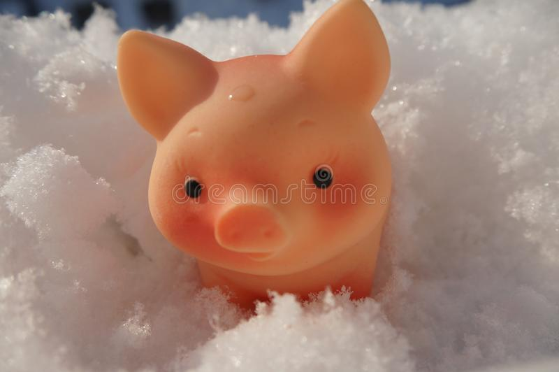 Symbol of the new year pig in the snow stock images