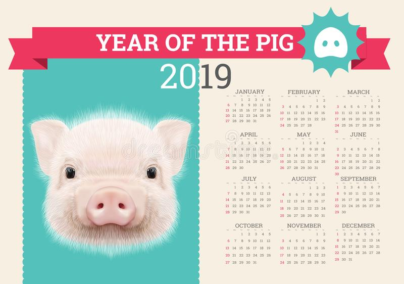 Stylish Pig Calendar For 2019 Vector Editable Template With Concept