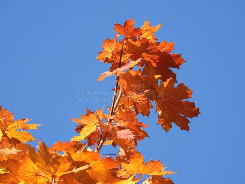 Symbole d'automne photo libre de droits