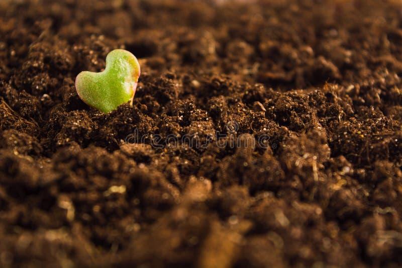 Symbole de l'amour, coeur de feuille verte sur la terre image libre de droits