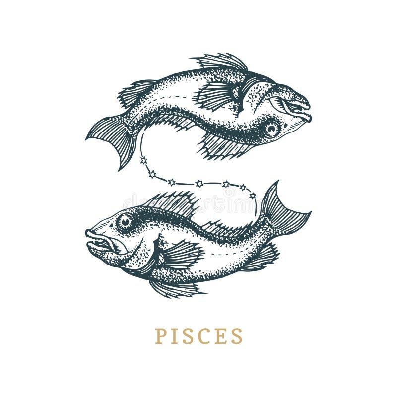 Symbole de zodiaque de Poissons, tiré par la main en gravant le style Illustration de graphique de vecteur rétro des poissons ast illustration de vecteur