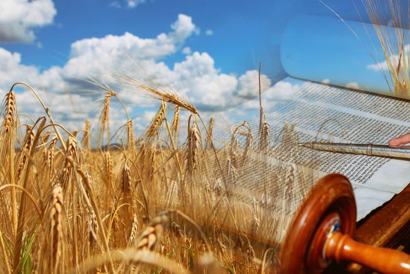 Symbole des j?dischen Feiertags Shavuot Torah und des Weizenfeldes stockbild
