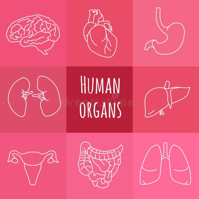 Symboler av mänskliga organ stock illustrationer