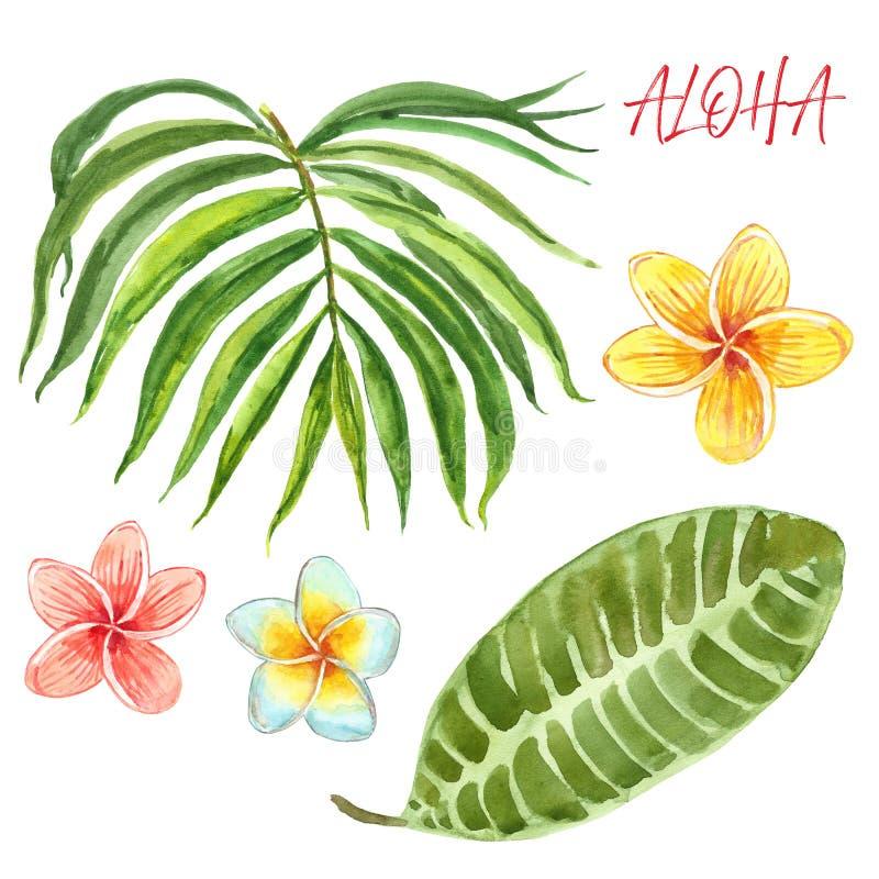 Symboles des vacances d'été Usines exotiques tropicales d'aquarelle peinte à la main, feuilles et fleurs, d'isolement sur le fond illustration stock