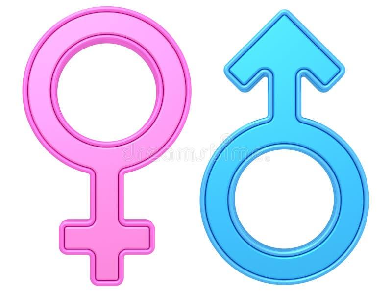 Symboles masculins et femelles de genre de couleurs bleues et roses sur le blanc illustration stock