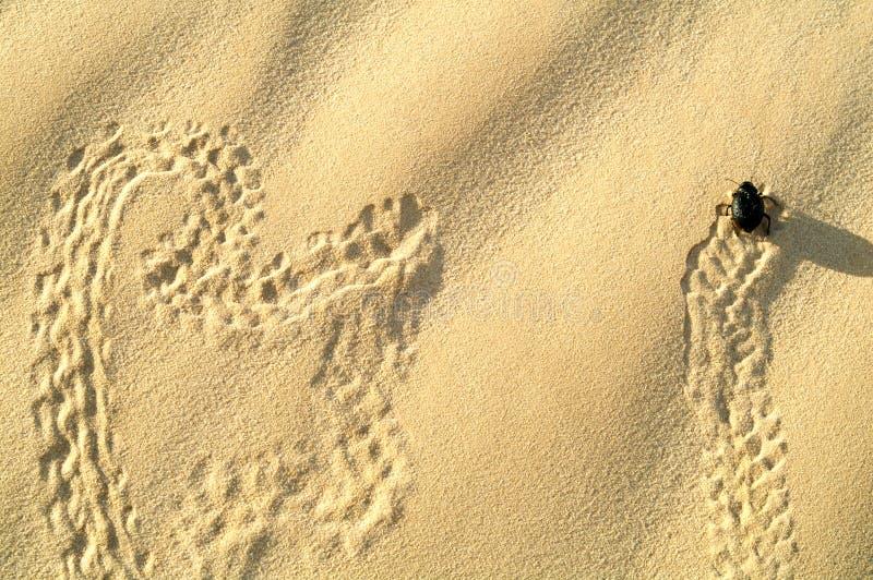 Symboles sur le sable. photos stock
