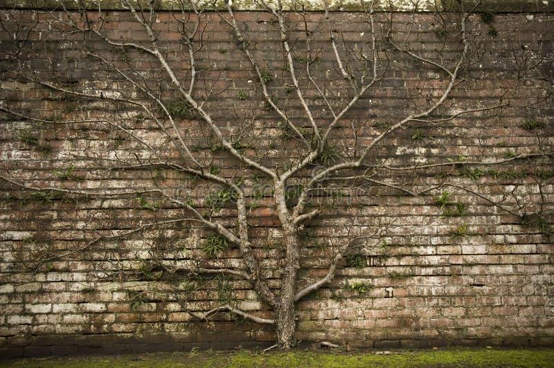 Symbolic Tree royalty free stock photography