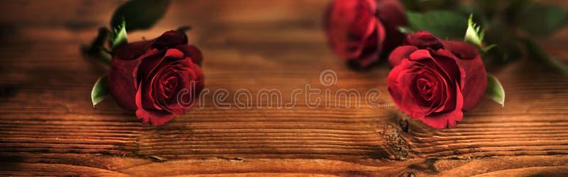 Symboliska röda rosor för valentindag royaltyfri fotografi