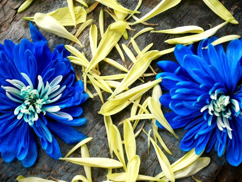 Symbolprozente zeichneten mit den Blumenblättern auf einem hölzernen Hintergrund lizenzfreie stockfotos