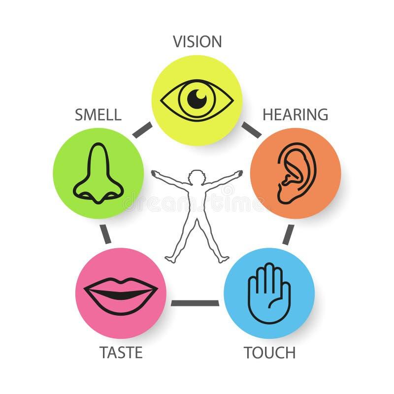 Symbolsuppsättning av fem mänskliga avkänningar: vision lukt, utfrågning, handlag, ta vektor illustrationer