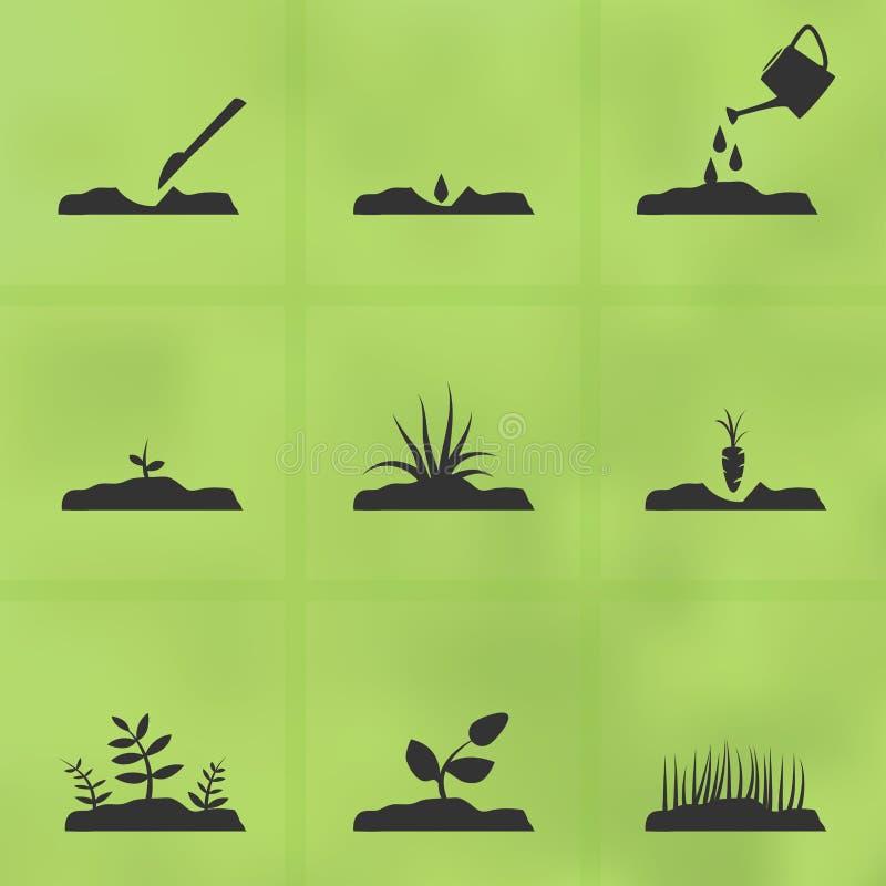 Symbolsuppsättningetapper av hur man växer en växt från frö vektor illustrationer