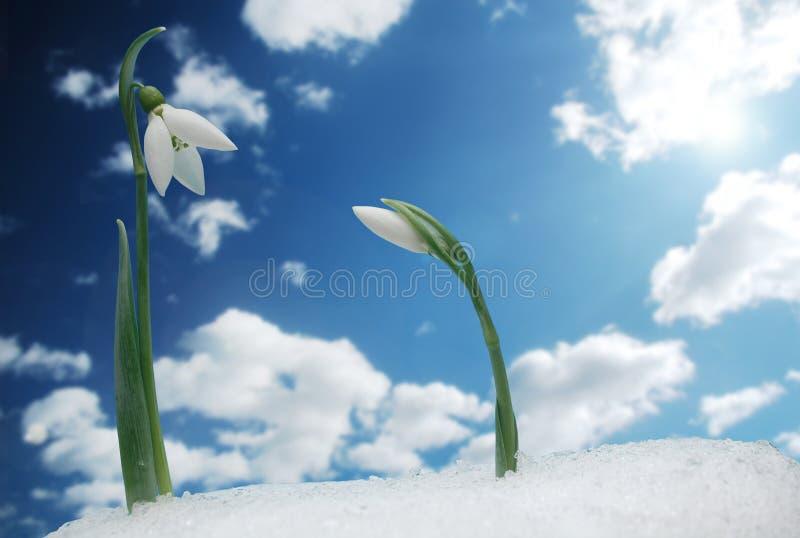 Symbool van de lente royalty-vrije stock afbeeldingen