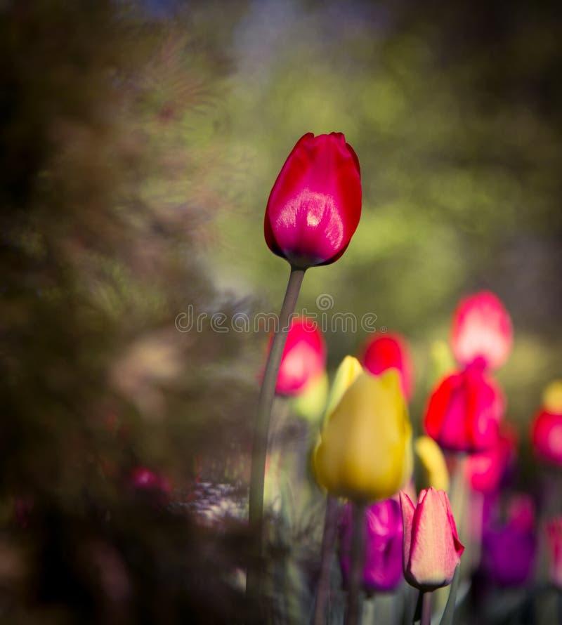 Symbool van geluk, liefde, bewondering stock fotografie
