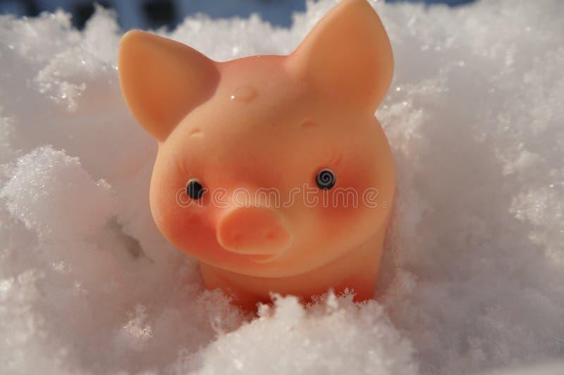 Symbool van het nieuwe jaarvarken in de sneeuw stock afbeeldingen