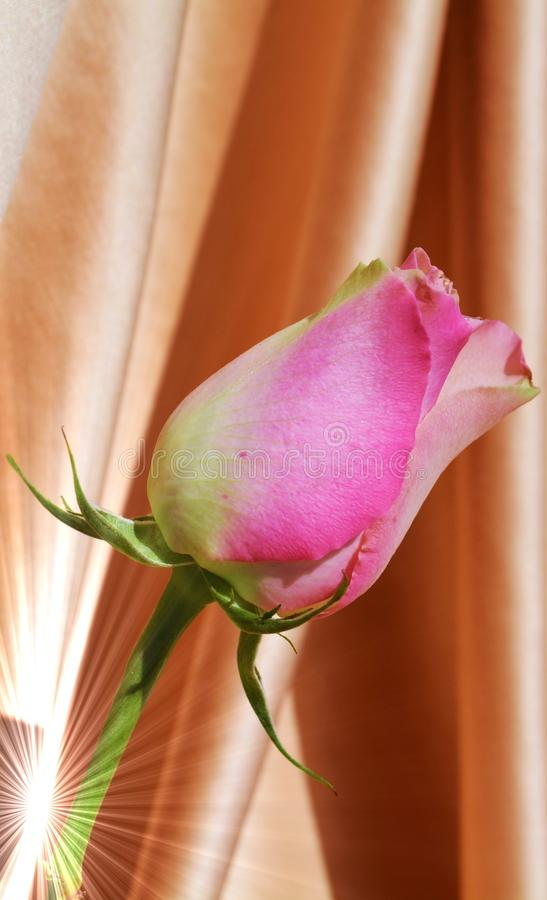 Symbool van liefde en appreciatie stock foto