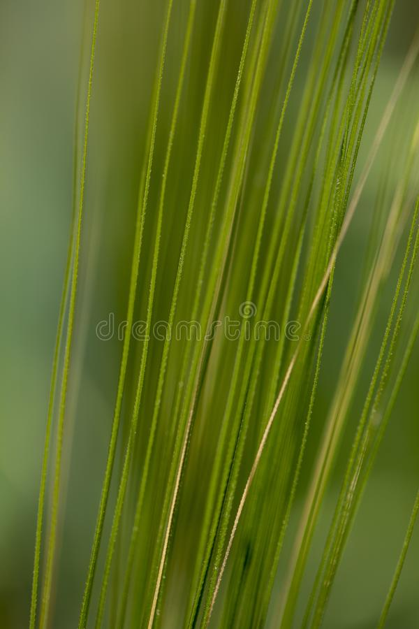 Symetria natury fotografia stock