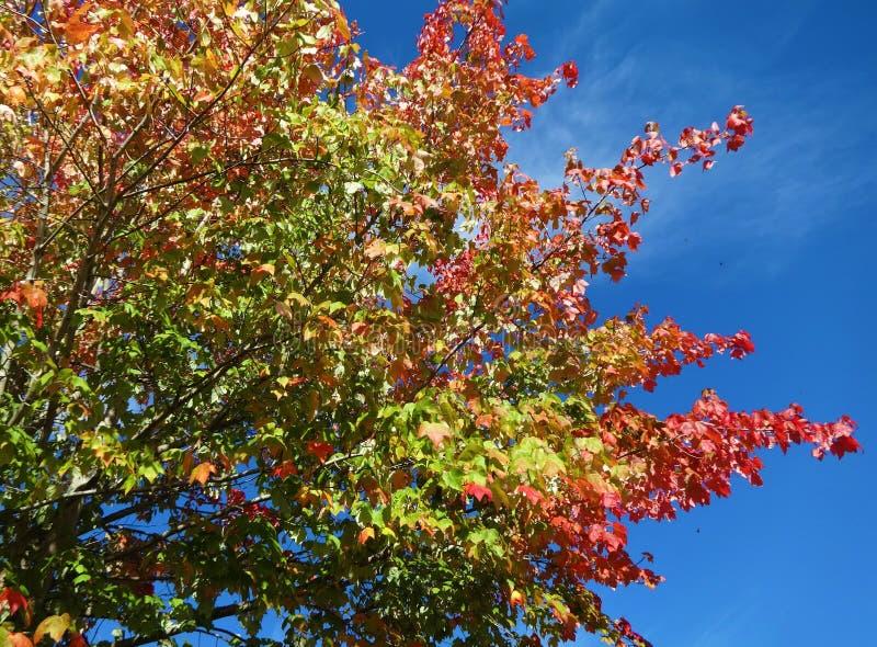 Symfonie van kleuren in de herfst stock foto