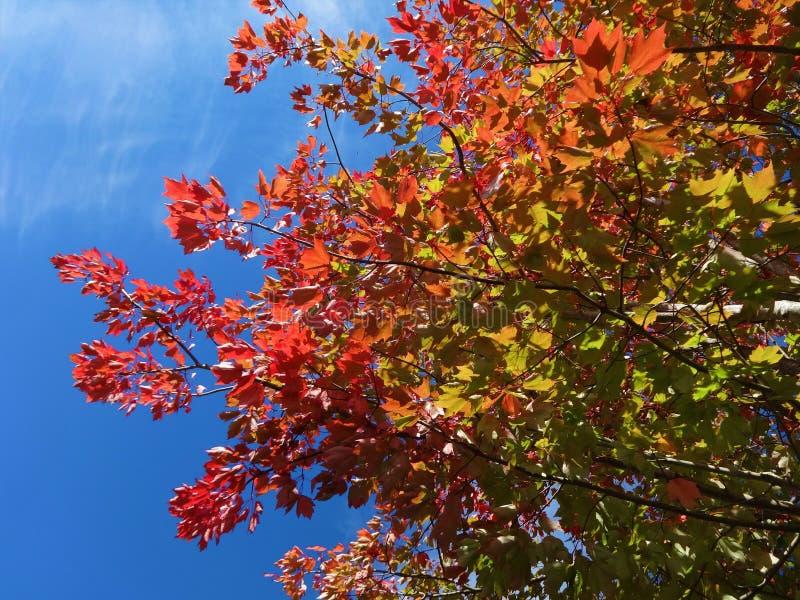 Symfonie van kleuren in de herfst stock foto's