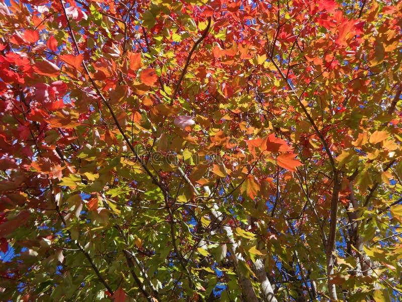 Symfonie van kleuren in de herfst stock afbeelding