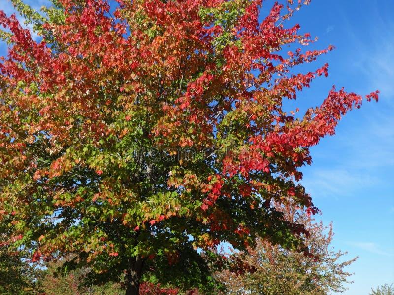 Symfonie van kleuren in de herfst royalty-vrije stock foto