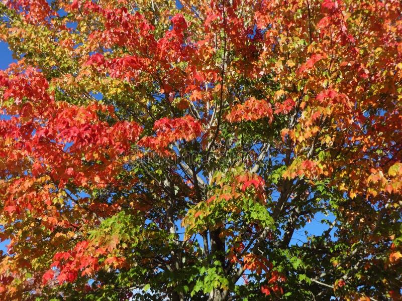 Symfonie van kleuren in de herfst royalty-vrije stock afbeeldingen