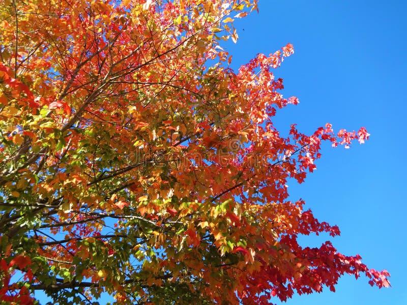 Symfonie van kleuren in de herfst royalty-vrije stock foto's