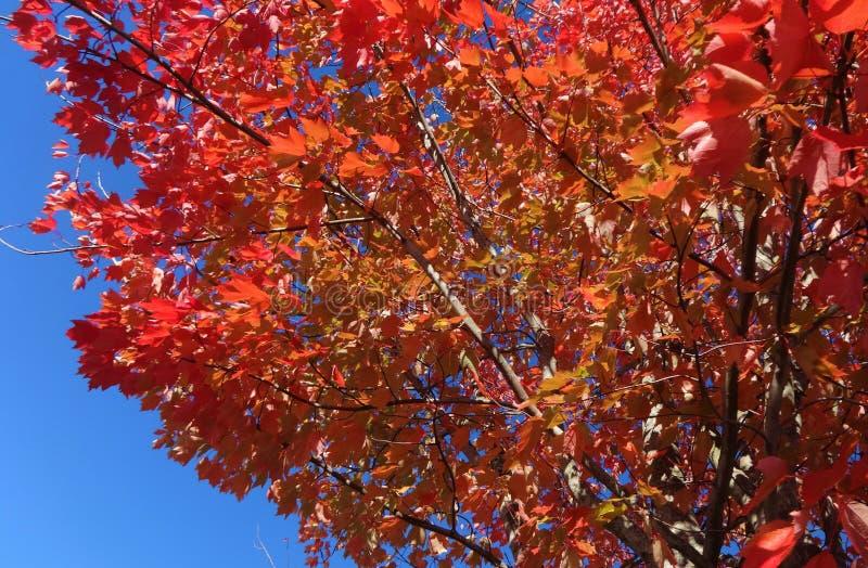 Symfonie van kleuren in de herfst royalty-vrije stock afbeelding