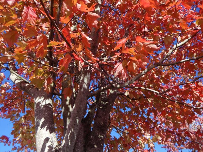 Symfonie van kleuren in de herfst stock fotografie
