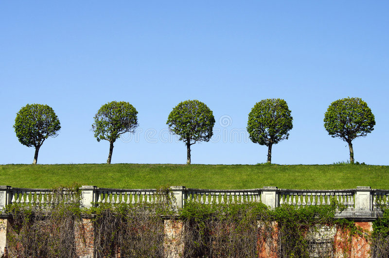Symmetric trees over old fence stock image