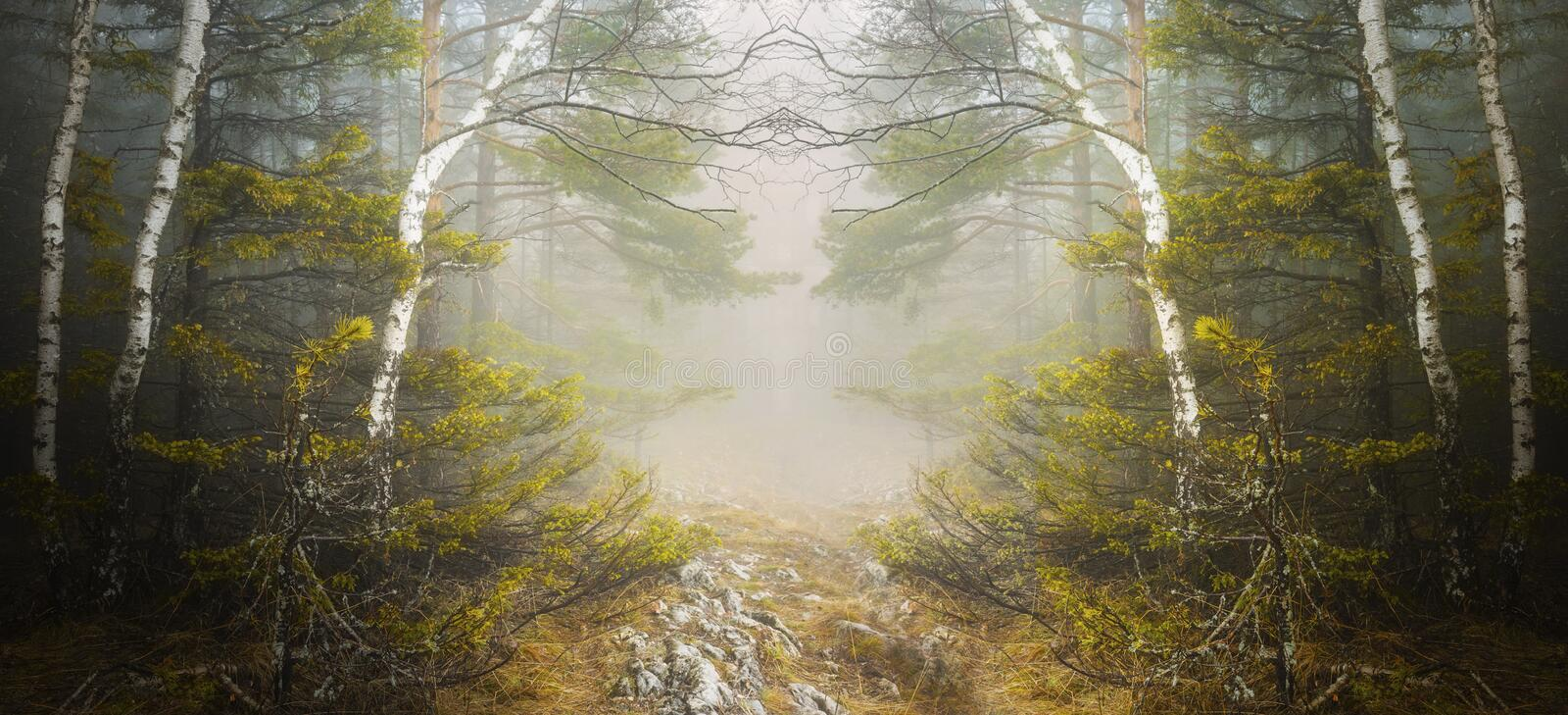 Symmetrical forest and mysterious fog royalty free stock images