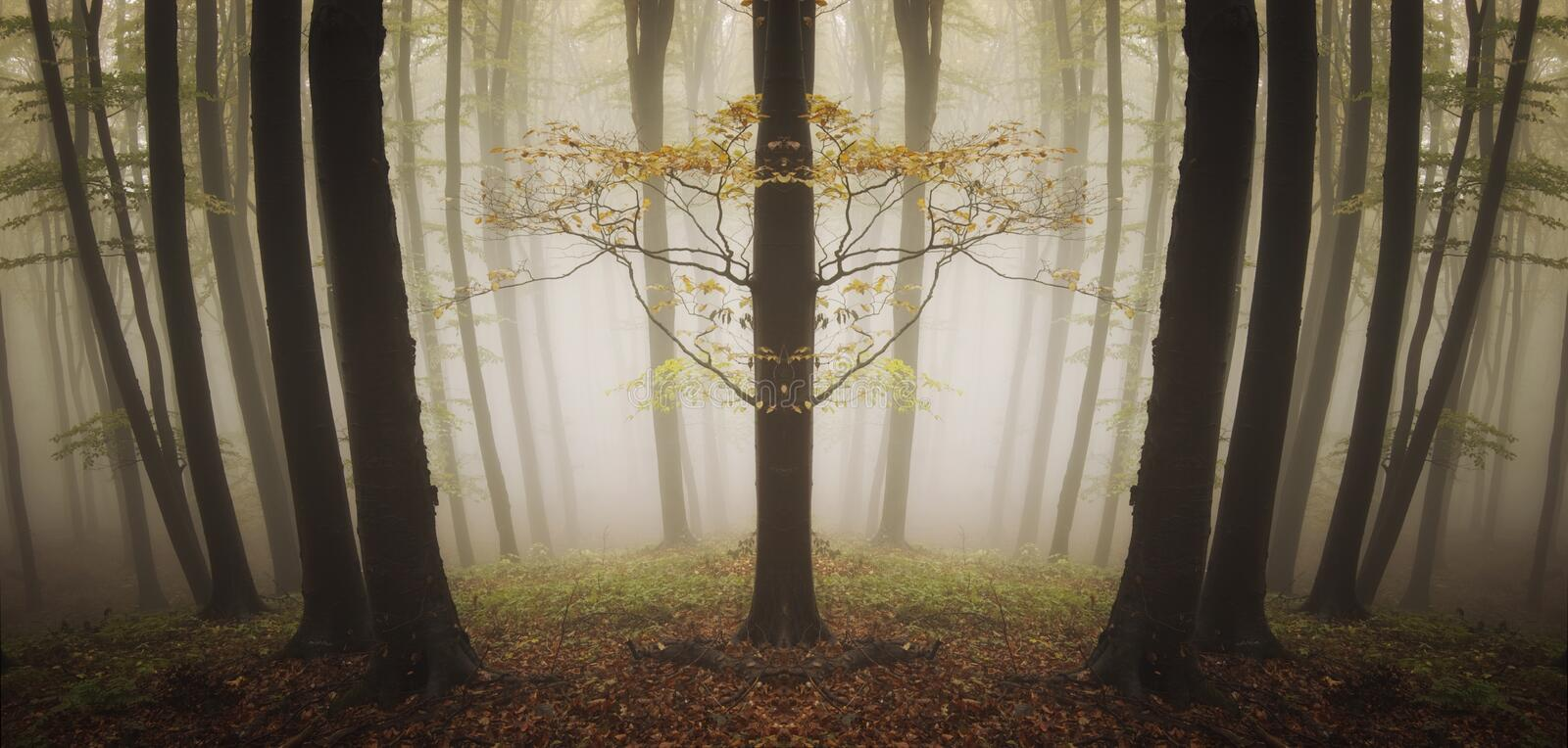 Download Symmetrical Strange Tree In A Forest With Fog Stock Images - Image: 31705874