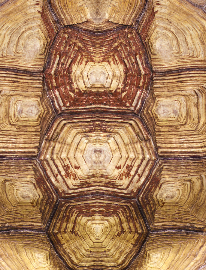 Symmetrical turtle shell texture. The Symmetrical turtle shell texture royalty free stock photography
