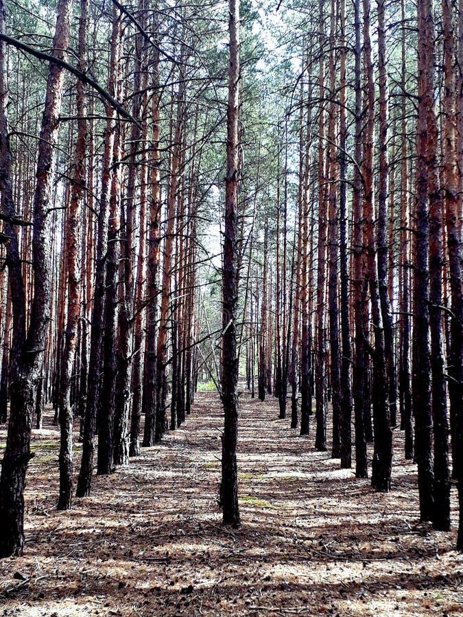Symmetrie in het bos stock foto